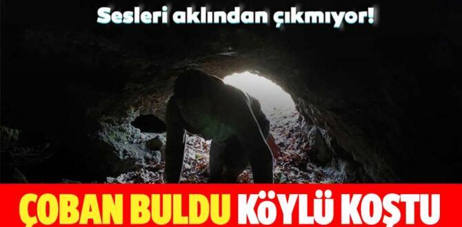Bursa'da çoban tesadüfen buldu! Sesleri aklından çıkmıyor