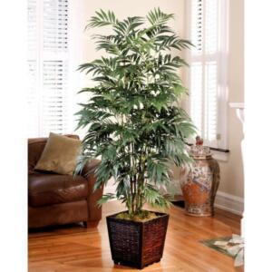 Bambu Palmiyesi İç mekana uygun, şık bir mini-ağaç. Fazla güneşe maruz bırakmadığınız sürece uzun yıllar yaşatabileceğiniz Bambu Palmiyeleri de evin havasını iyileştirmek için birebir.
