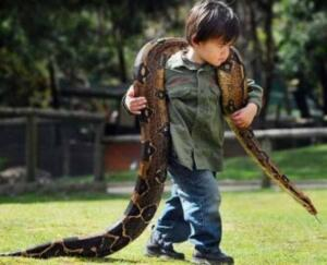 """Gel zaman git zaman, oduncu ağır hastalanmış. Kuyunun başına gidemez olmuş. Birkaç gün geçince bolluğa alışmış evinde darlık başlamış. Oduncu oğlunu yanına çağırmış ve yılanın sırrını anlatmış.""""Git kör kuyunun başına ve oğlum olduğunu söyle, yılan sana altın verecek"""" demiş. Oğlu inanmamış ama gitmiş, yılan önce saklanmış, sonra ortaya çıkmış. Onun oduncunun oğlu olduğuna iyice kanaat getirince de kuyuya inip bir altın getirmiş. Oğlan önce inanmadığı hikâyenin gerçek olduğunu görünce hırsa kapılmış, kim bilir daha ne kadar altın var kuyudan içeride demiş. Hırsla yılanı öldürmek için bir hamle yapmış, ıskalamış ama yılanın kuyruğunu koparmış. Yılan da can havliyle dönüp oğlanı sokmuş ve öldürmüş. Akşam yaklaşıp da oğlu gelmeyince oduncu iyice endişelenmiş. Hasta yatağından sürünerek bile olsa kalkmış. Kuyunun başına gitmiş ki oğlu cansız yatıyor.Yılan o arada görünmüş ki, kuyruğu yok ve kanlar içinde.."""