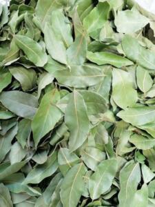 Defne, her zaman yeşil bir ağaçtır. Yazın ve kışın yaprağını dökmez. Aromatik bir bitki olan defnenin kokusu hoştur. Defne yaprağı, yemeklere lezzet vermek amacıyla kullanıldığı gibi tıbbi etkileri de bulunmaktadır.