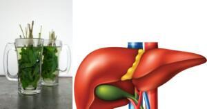 Karaciğeriniz siz farkında olmasanız da vücudunuzu temizleyen en önemli organlardandır. Eğer fazla yağlı yemekler tüketiyorsanız ve ayrıca alkol kullanıyorsanız, karaciğerinizi zorluyorsunuz demektir. Düzenli temizlenmediğinde karaciğer fonksiyonlarında düşüş olabilir ve bu olduğunda sağlığınızı ciddi anlamda kaybedebilirsiniz. Size bahsetmek üzere olduğumuz içecekleri düzenli olarak tükettiğiniz takdirde karaciğeriniz tertemiz, sağlığınız da en üst seviyede olacaktır.