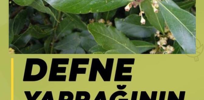 Defne Yaprağı ve Defne Yaprağı Çayının Faydaları