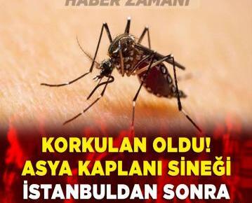 Korkulan oldu! Asya Kaplan Sivrisineği İstanbul'dan sonra 13 ilde daha görüldü