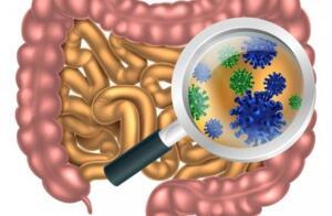 Bağırsak florası düzelmediği sürece yani buradaki bakteri çeşitliliği ve denge düzelmediği sürece ne kadar diyet yaparsak yapalım çok zor kilo verebiliriz ve bu kiloları hızlı bir şekilde tekrar alırız. Son zamanlarda birçok bilim adamına göre bağırsak mikrobiyatasını bir organ olarak ele almalıyız, tıpkı vücudumuzda yer alan diğer organlar gibi… Mikrobiyotamız sürekli gelişim halindedir. Bir sürü hücreden oluşur ve diğer bütün organlarımızla da sürekli iletişim halindedir. Tokluk hissi, aşırı iştah ve kilolu olmada da bu mikrobiyota söz sahibidir!