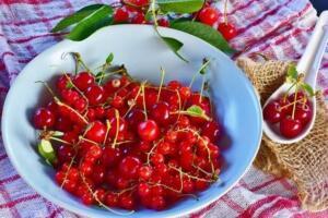 Şeker farklı türleri olan bir hastalık olduğu için tedavisinde de alternatifler sunulmaktadır. Buna karşın şeker rahatsızlığı belli püf noktaları ile kontrol altına alınabilmektedir. Vişne sapı çayı şeker hastalığı konusunda faydalı olan çaylardan biri olarak tanımlanmaktadır. Çayın tüketilmesi; İştahın kontrol altına alınmasını, Kan şekerinin düzenlenmesini ve seviyelerinin dengelenmesini sağlamaktadır.
