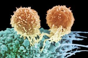 Prof. Mermersky diyorki Bu tarif insanlara sağlık ve iyi yaşam sağlar.Vücüda gençlik ve Enerji sağlar. kansere karşı reçetedir. Bu tedavi tüm gerekli vitamin, mineraller , Biyoaktif maddeler, Proteinler, Karbonhidratlar ve bitkisel yağlar içerir. Bu nedenle sağlıklı bir vücüdu korumak iç organları ve bezleri geliştirir (iyileştirir ) ve kanseri ortadan kaldırır. Not: Mermersky in …bir önceki reçetenin Mısır filizi yerine Buğday filizinin ilave edilmiş halidir
