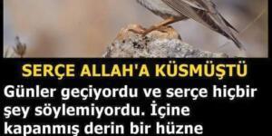 Günün hikayesi: Serçe Allah'a Küsmüştü